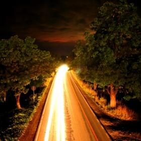 Copaci si dâre de lumină
