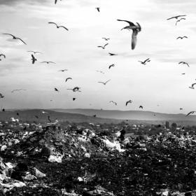 Fagaduinta reciclarii