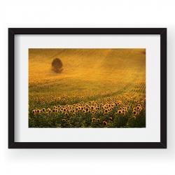 Golden Moment - Tablou 40x60cm Sorin Onisor 04