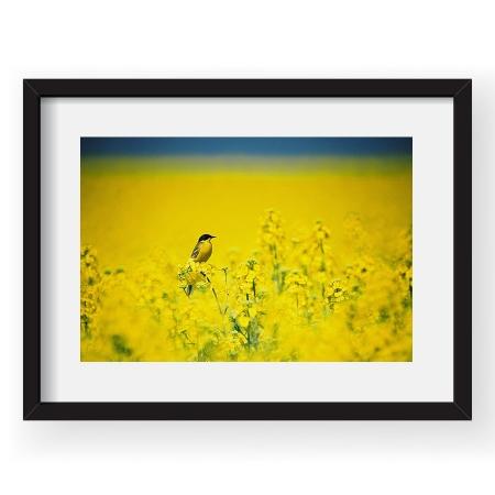 Yellow Lake - Tablou 40x60 Vlad Eftenie 01